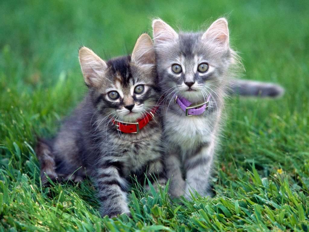 Kittens wallpaper Animals,Kittens