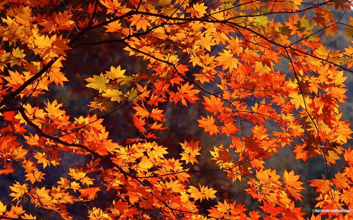Autunno wallpaperart for Desktop autunno